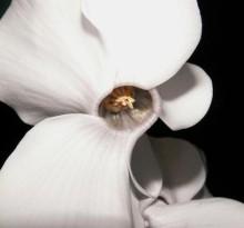 1080087481-flower.jpg